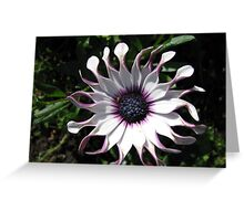 Fresh as a Daisy - Whirligig at Dawn Greeting Card