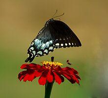 Fly Away, Fly Away by Brenda Burnett