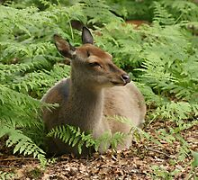 Fawn in the Woods by MendipBlue