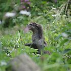 The Otter who wanted to be a Meerkat by MendipBlue