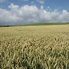 Wheat Field by Kimmeridge Bay by MendipBlue
