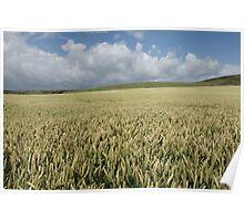 Wheat Field by Kimmeridge Bay Poster