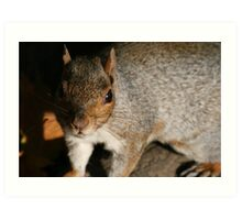 Squirrel up close Art Print