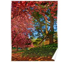 Cherry Blossoms in the Shade Poster