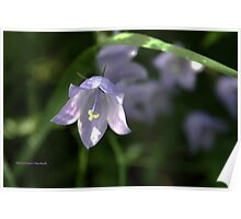 Delicate wild flower Poster