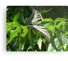 Tiger Swallowtail Metal Print
