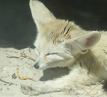 let the sleeping fox lie. by whackycat