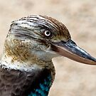 Blue Winged Kookaburra by Jenny Dean