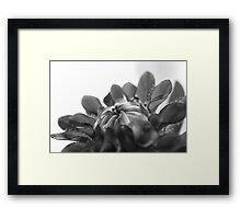 Black and white flower ready to open  Framed Print