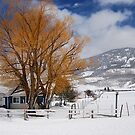 Outstanding in Orange - Snow Scene by Barbara Burkhardt