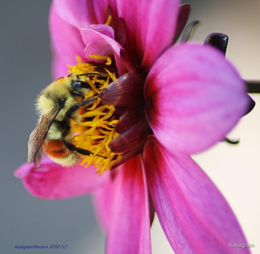 Breakfast of The Bumble Bee by Katagram