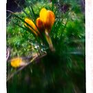 Saffron Trip - Flower Fantasy Art Print by Christian Bodden