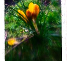 Saffron Trip - Flower Fantasy Art Print by Christian Bodden