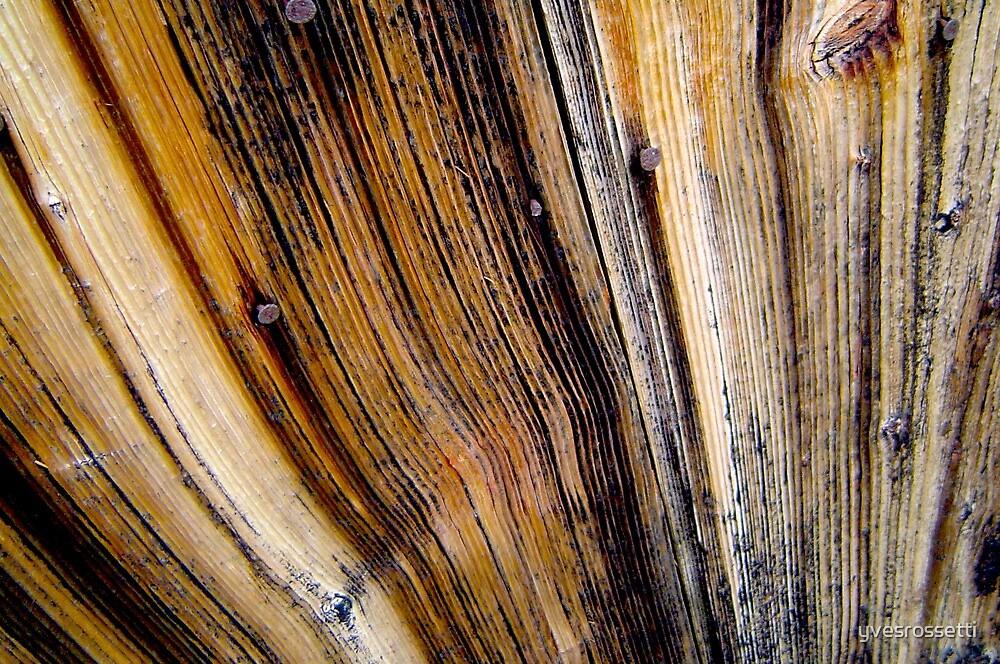 door wood by yvesrossetti