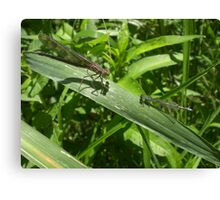 Two Dragonflies Canvas Print