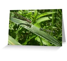 Two Dragonflies Greeting Card