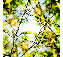 Clarity Photographic Print