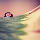 Through The Water Drop by ameliakayphotog