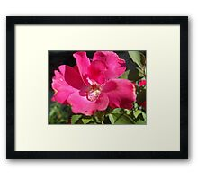 A Touch of Water Framed Print