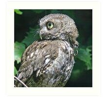 Screech owl in profile Art Print