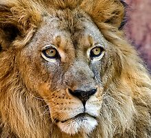 Majestic King by Ann J. Sagel