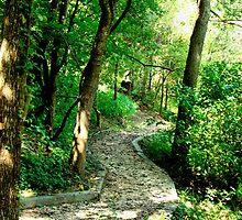Follow the Trail by lorib