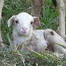 Little Lamb by louisegreen