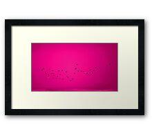 Pink Flock! Framed Print