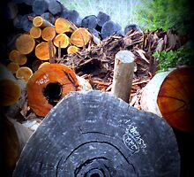 Timber wholesale supermarket...old and new...big or small, we have it all ! by JacquieDuncan