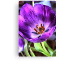 HDR attempt - Tulip Canvas Print