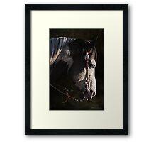 Max - Portrait of a Stallion Framed Print