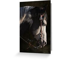 Max - Portrait of a Stallion Greeting Card