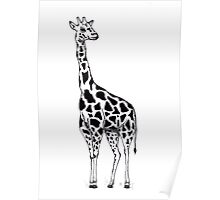 Line drawing Giraffe Poster