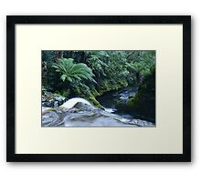 The Leap... Framed Print
