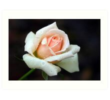 Peach of a Rose Art Print