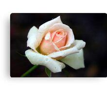 Peach of a Rose Canvas Print