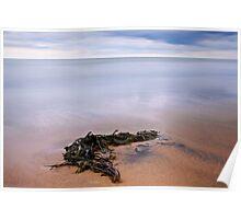 Seaweed, Crimdon, North East Coast. UK Poster