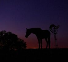 Outback Horse by Penny Kittel
