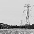 Electric Meadow by Jen Waltmon