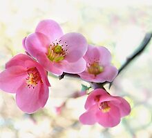 Blossoms by Marion  Cullen