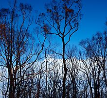 Kinglake Road, after the fires by Imagebydg