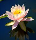 My Water Lilly.....bugged... by Larry Llewellyn