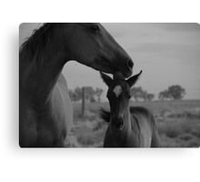 Mother Mare Canvas Print