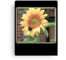 Sunflower, Butterfly, Environment, English Country, Garden Canvas Print