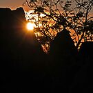 Wiradjuri Sunset by bazcelt