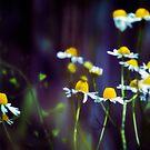 Shine on Dark Days by Vicki Field