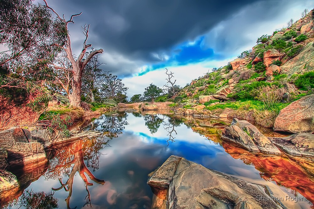 Beautiful Billabong by Shannon Rogers