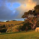 Mornington Peninsula Regional by Haydn Bucher