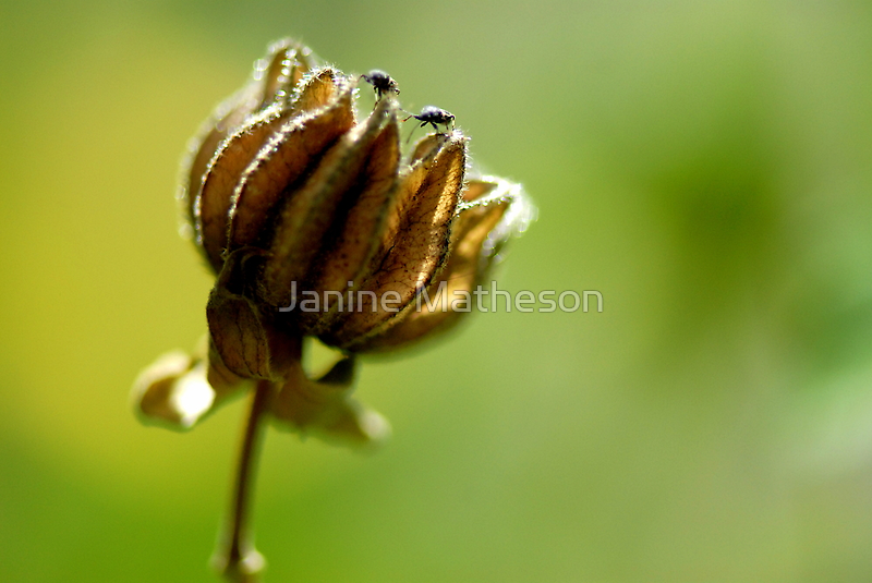 small world by Janine Matheson