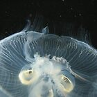 Jellyfish by Angel Szafranko